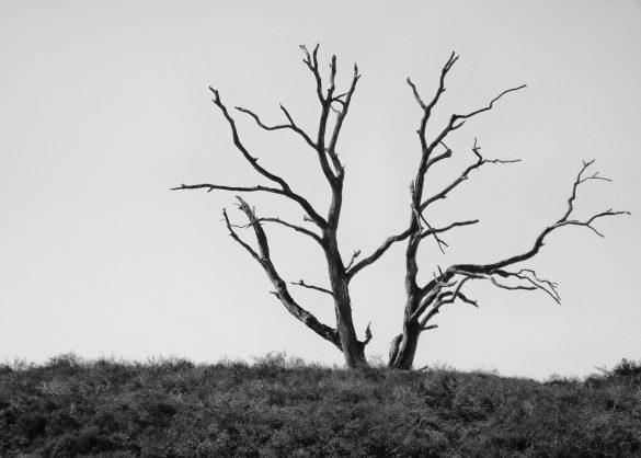 Naplánovaná smrť ochrany prírody